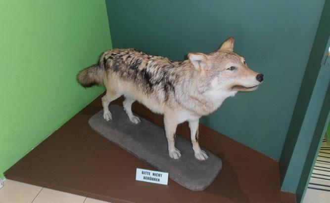 Naturkundemuseum Ostbayern in Regensburg Öffnungszeiten und Anfahrt